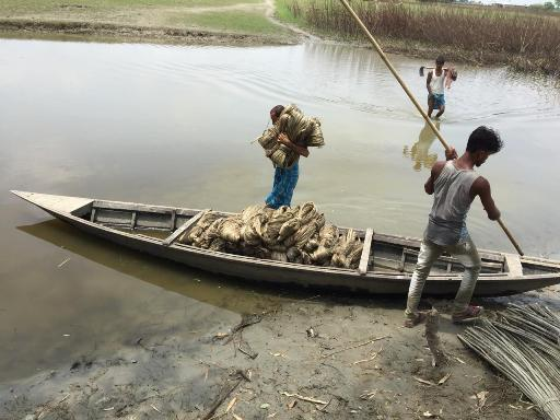 Carrying of RAW jute for drying