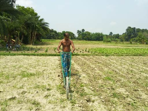 Weeding in the jute field using cycle weeder